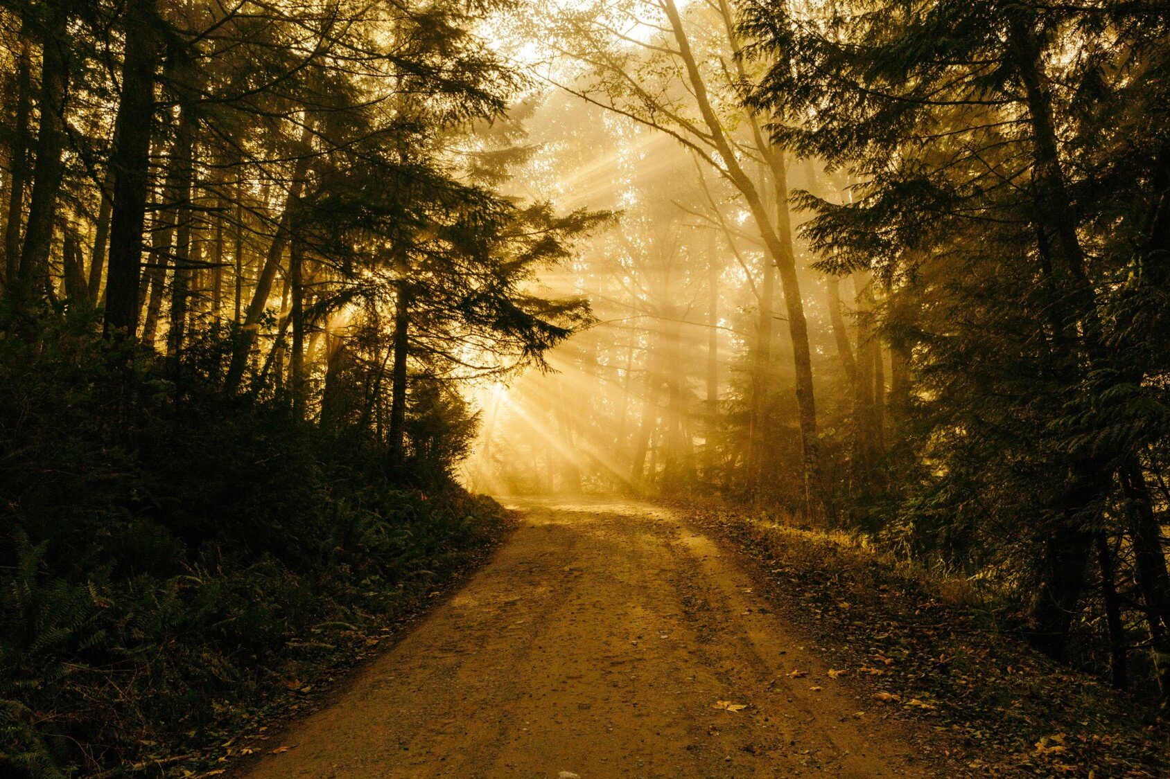 The Long Road to Your Self